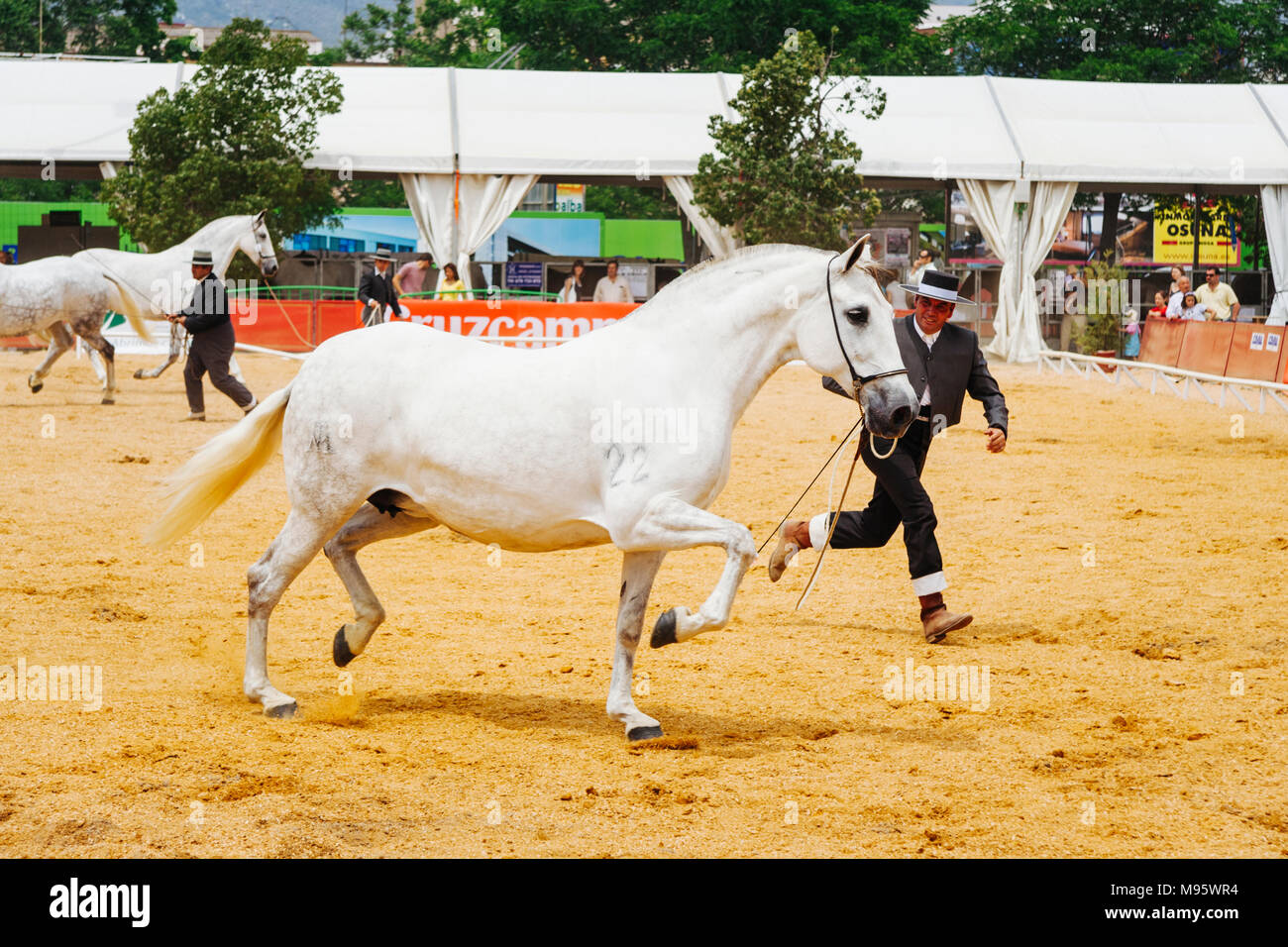 Córdoba, Andalucía, España : jinetes y thoroughbreeds andaluz en la Feria del Caballo de Córdoba. Foto de stock