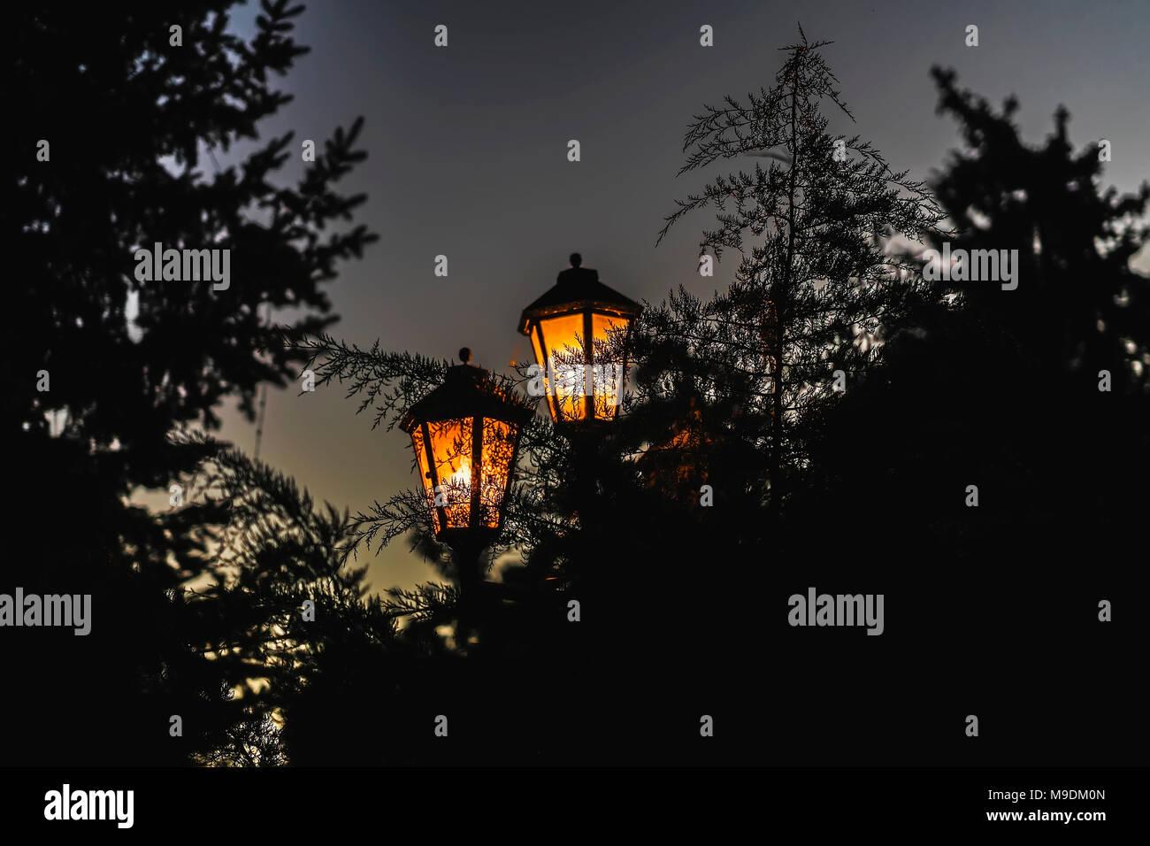 Calle la luz luminosa sobre los antecedentes de coníferas, branckes resaltado Imagen De Stock