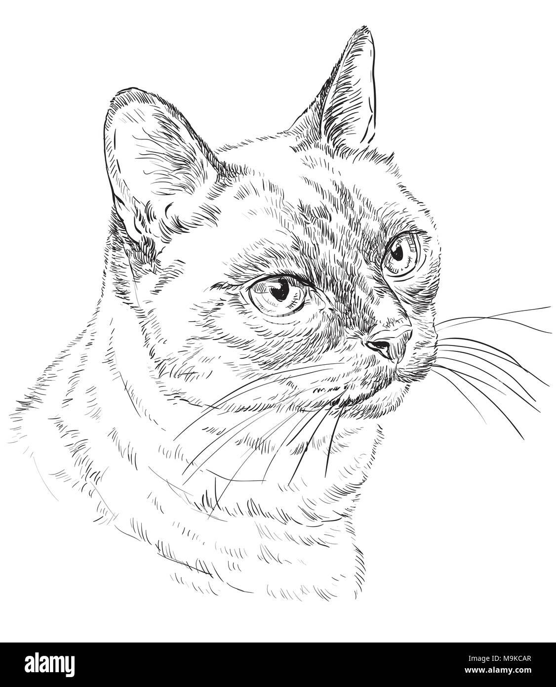 Contorno Vectorial Monocromo Retrato De Curioso Gato Tailandés En