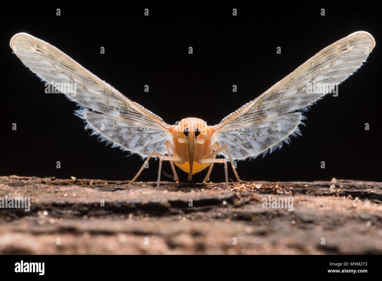 Lujoso Insectos Selva Tropical Para Colorear Foto - Dibujos Para ...