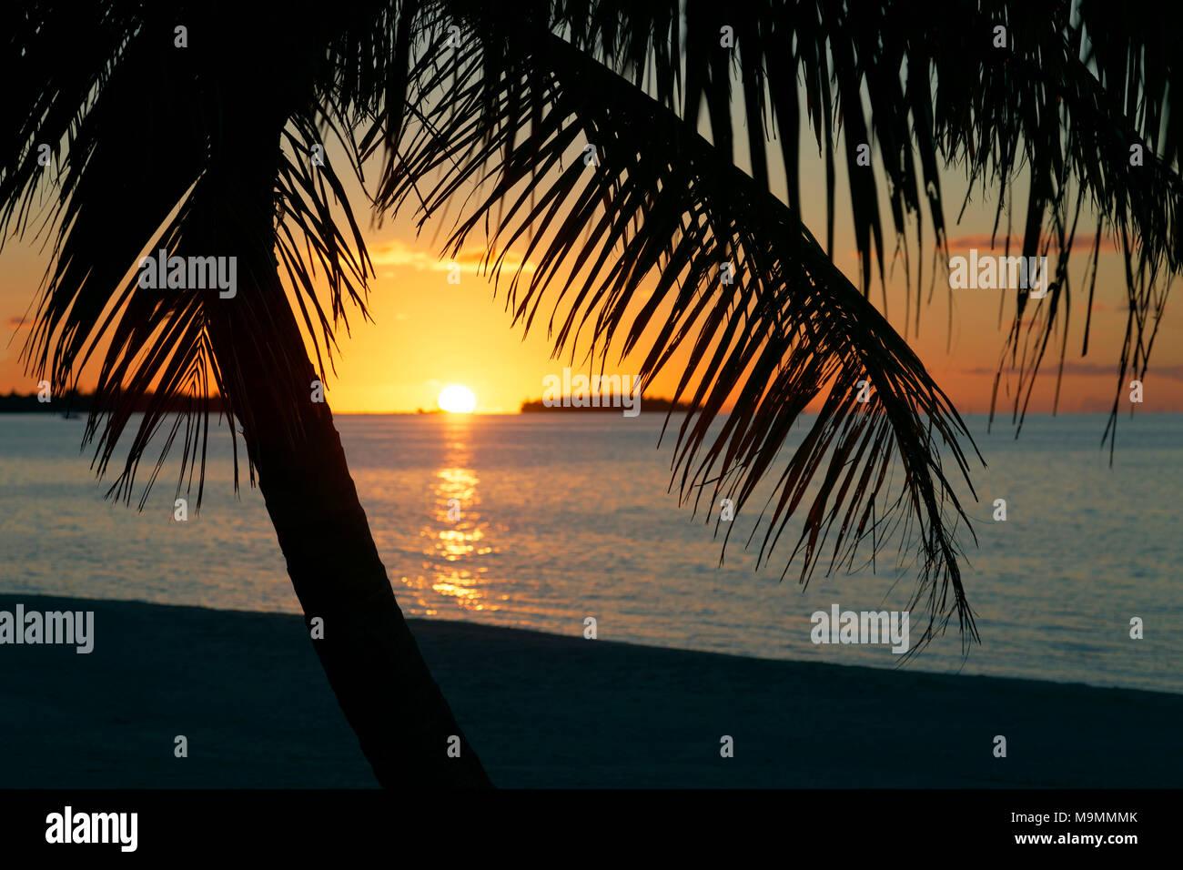 Palmera en la playa al anochecer, Tikehau Atolón Archipiélago Tuamotu, Islas Sociedad, Polinesia Francesa, las Islas de Barlovento Foto de stock