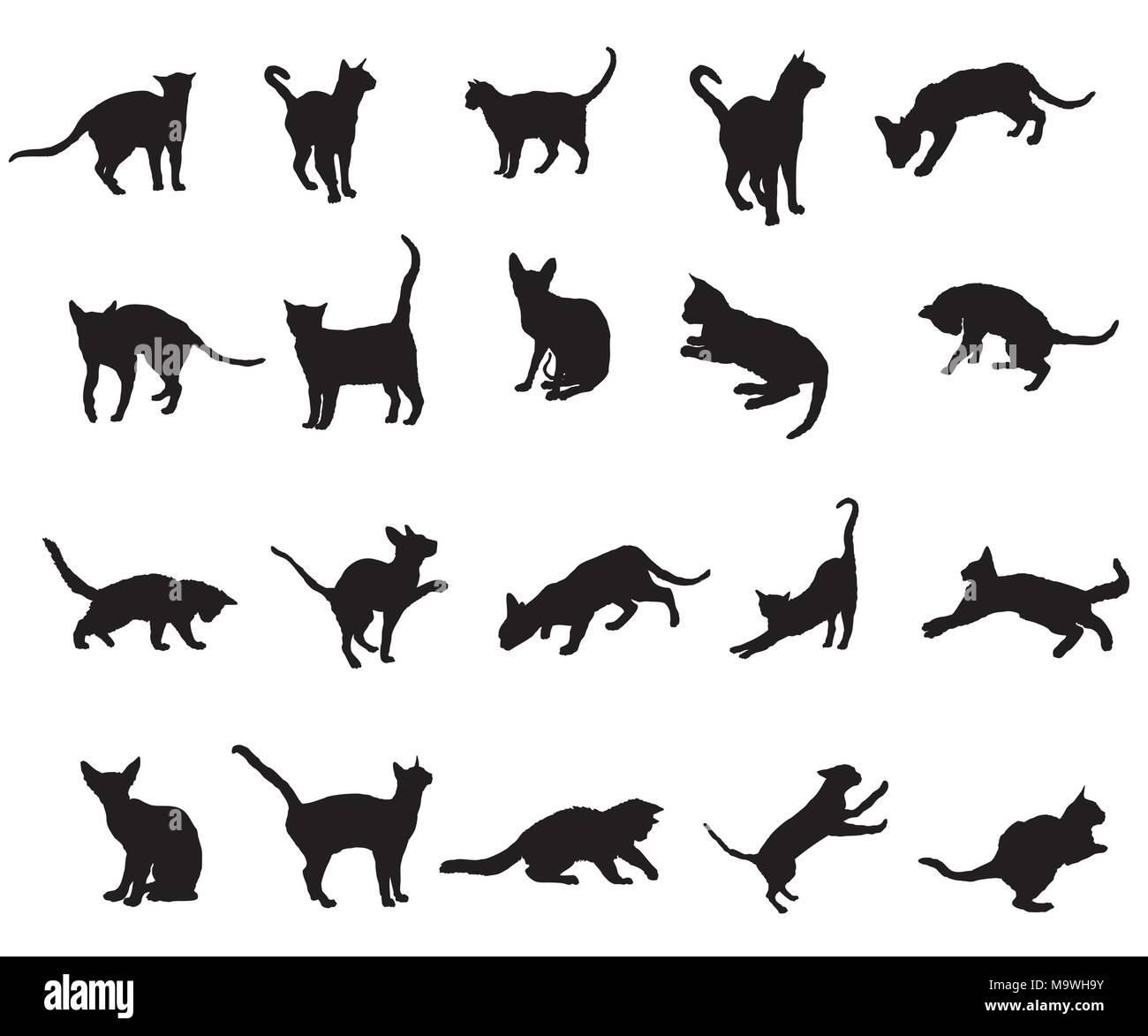 Conjunto De Diferentes Razas De Gatos Siluetas Sentado De Pie