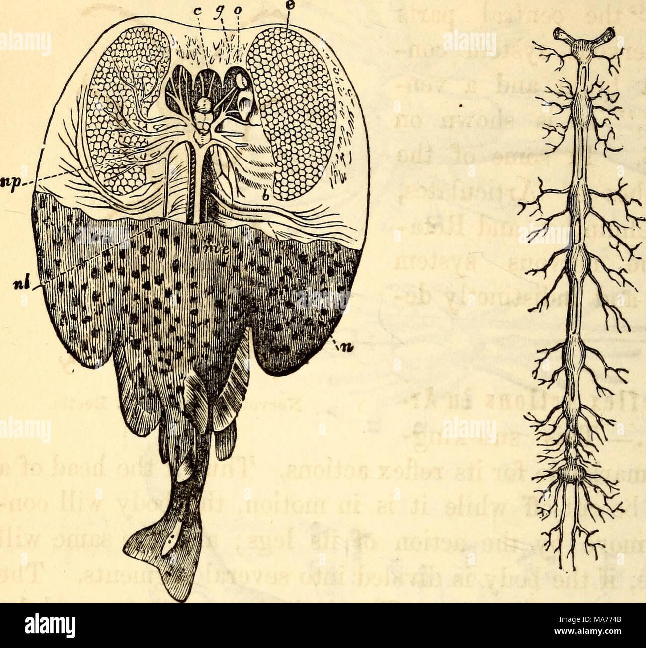 Dorable Peces Cráneo Anatomía Componente - Anatomía de Las ...