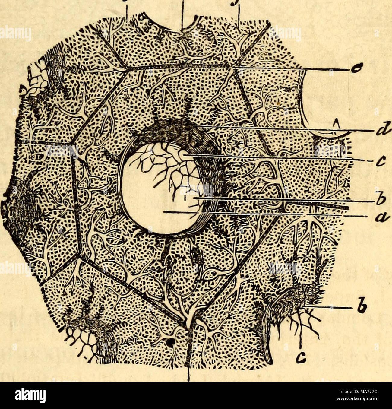 Vistoso Anatomía Y Fisiología Diferencia Viñeta - Anatomía de Las ...