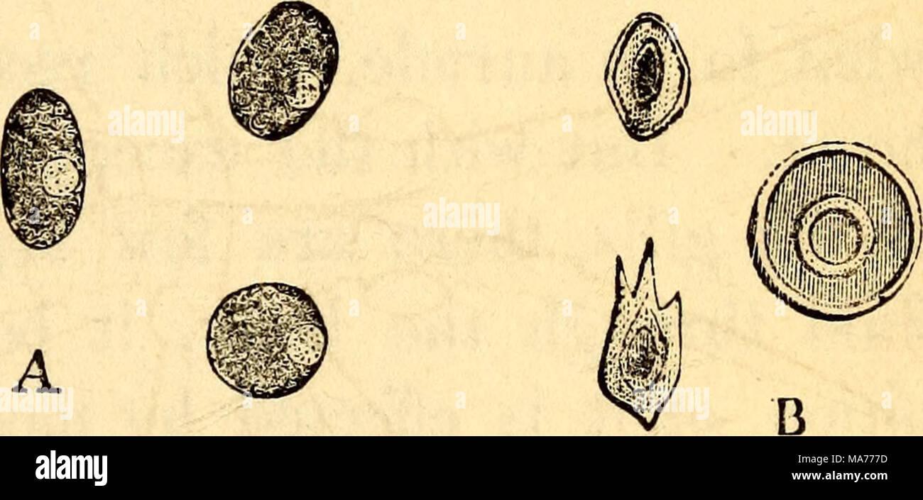 Increíble Anatomía De Una Bombilla Fotos - Imágenes de Anatomía ...
