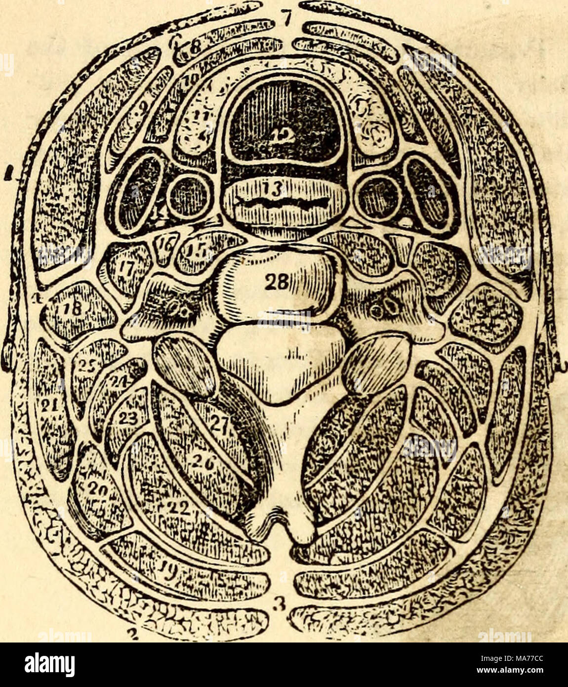 Anatomía y fisiología elemental : para colegios, academias y otras ...