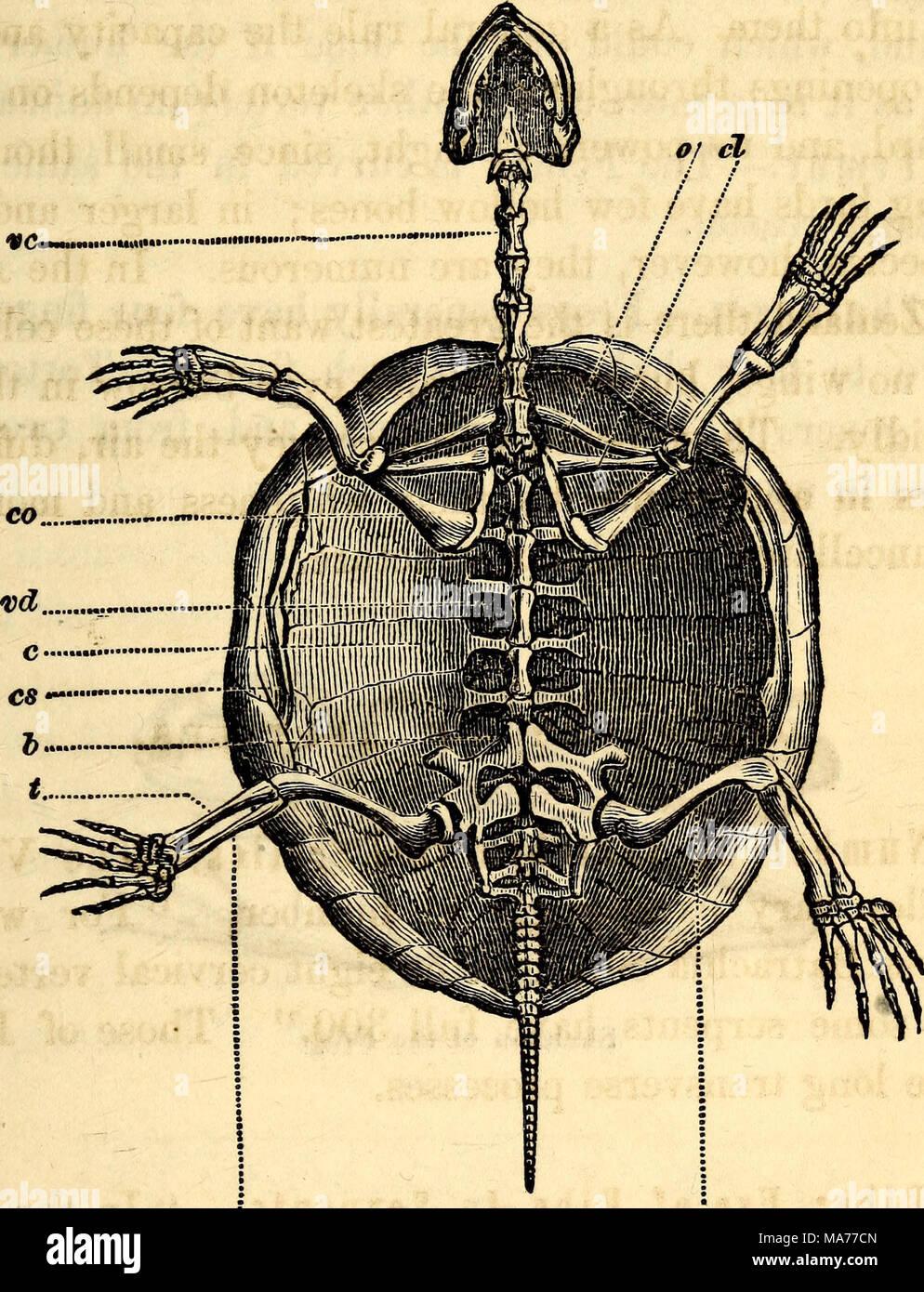 Increíble Anatomía Cuadro De Tortuga Cresta - Anatomía de Las ...
