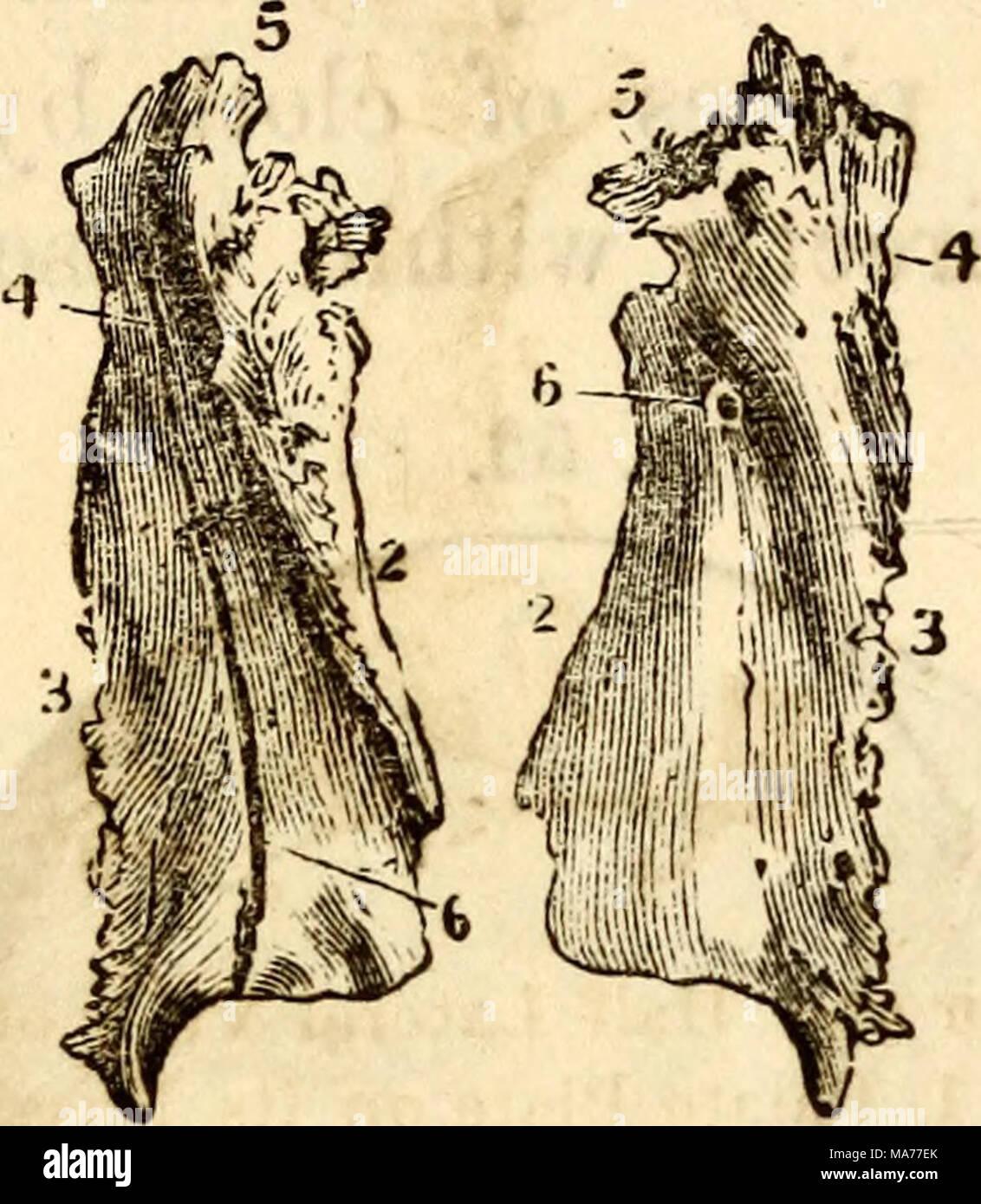 Magnífico Ranura En La Anatomía Patrón - Anatomía de Las Imágenesdel ...