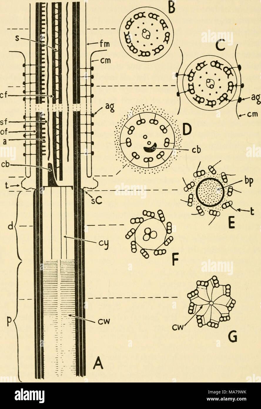 Electrón Estructura Microscópica De Protozoos El Texto De