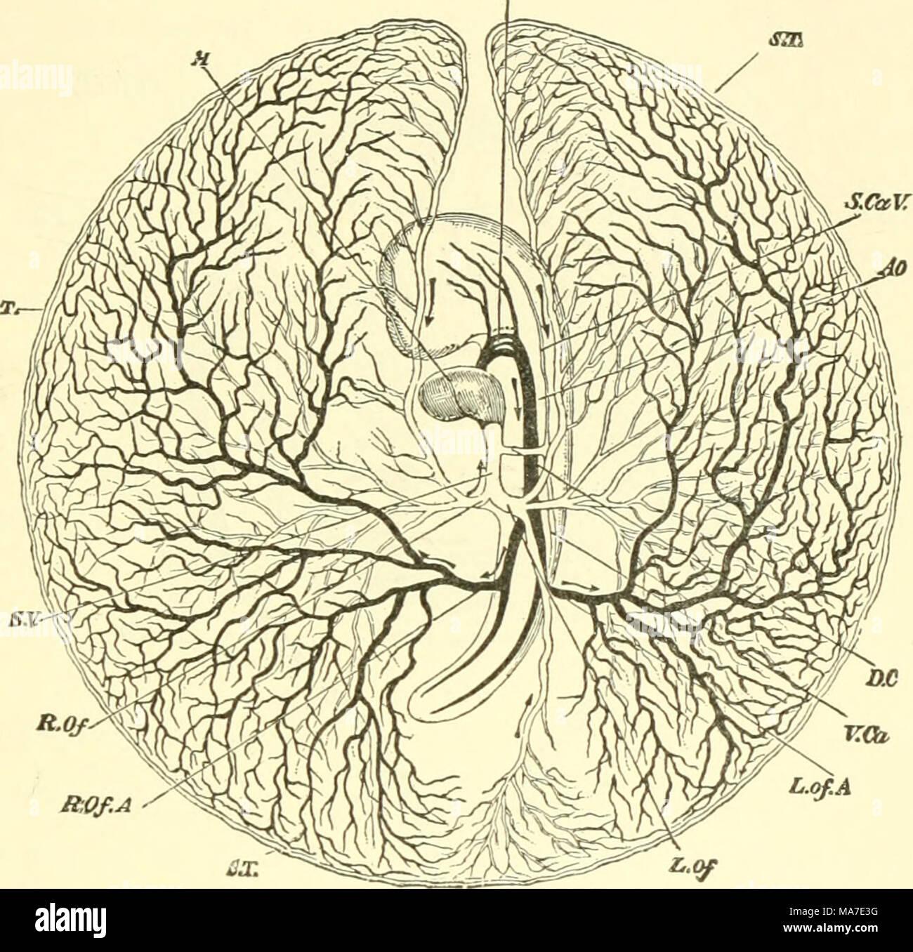 Ziemlich Distal In Der Anatomie Fotos - Anatomie Ideen - finotti.info