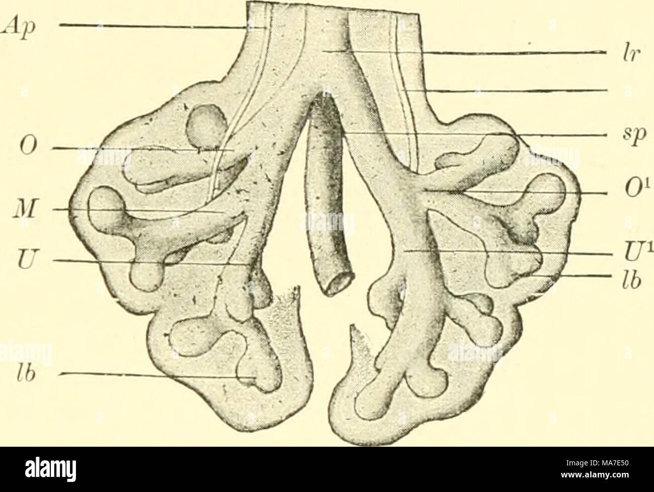 En die Einführung der Anatomie vergleichende Wirbeltiere, für ...