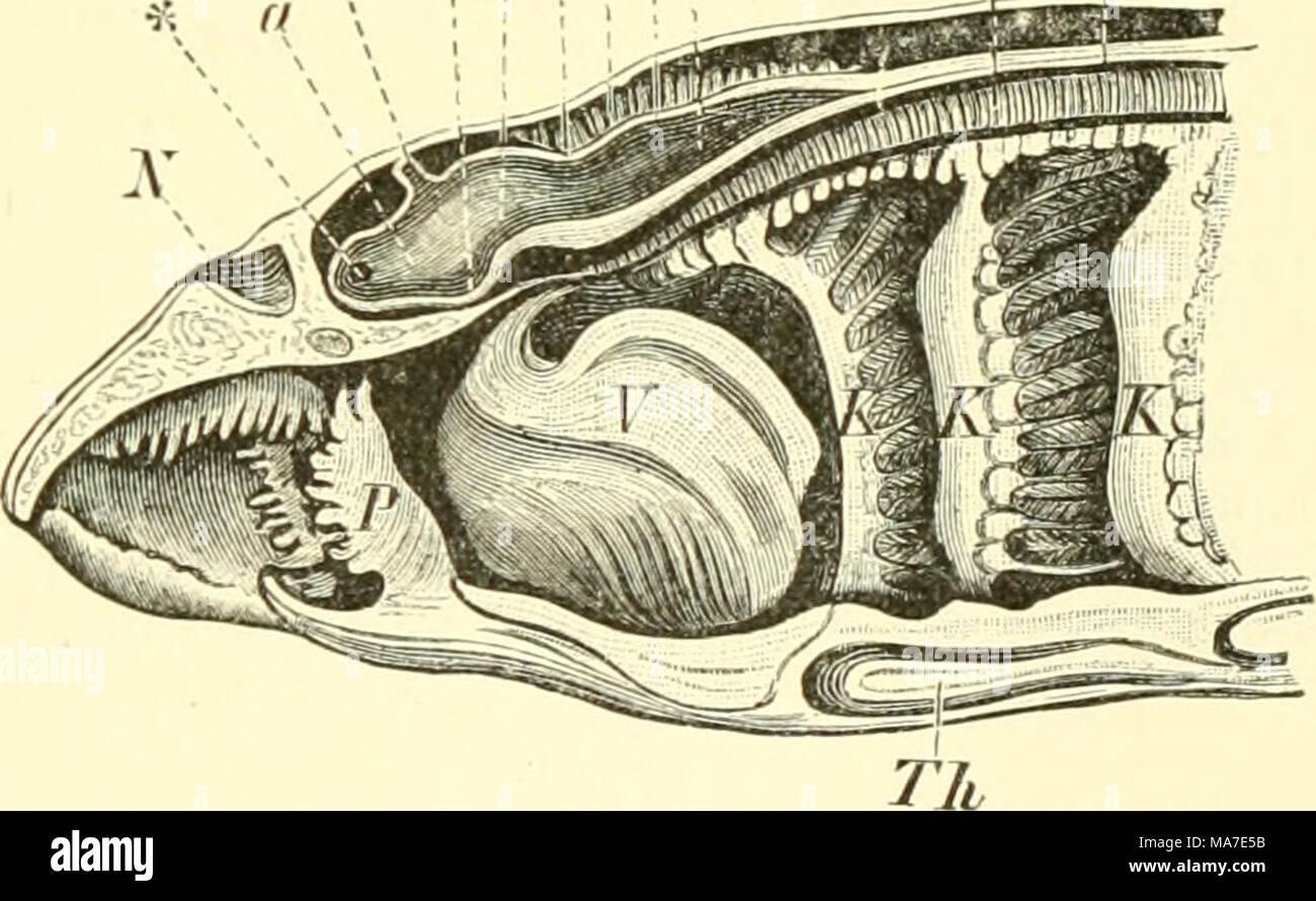 Charmant Anatomie Und Physiologie Artikel Für Gymnasiasten Fotos ...