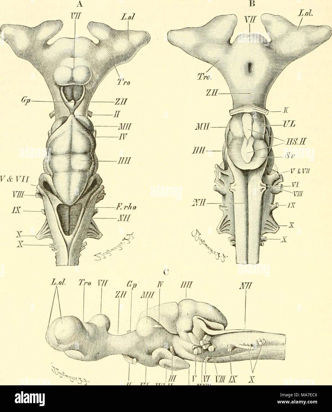 Niedlich Anatomie Lehrbedarf Zeitgenössisch - Menschliche Anatomie ...
