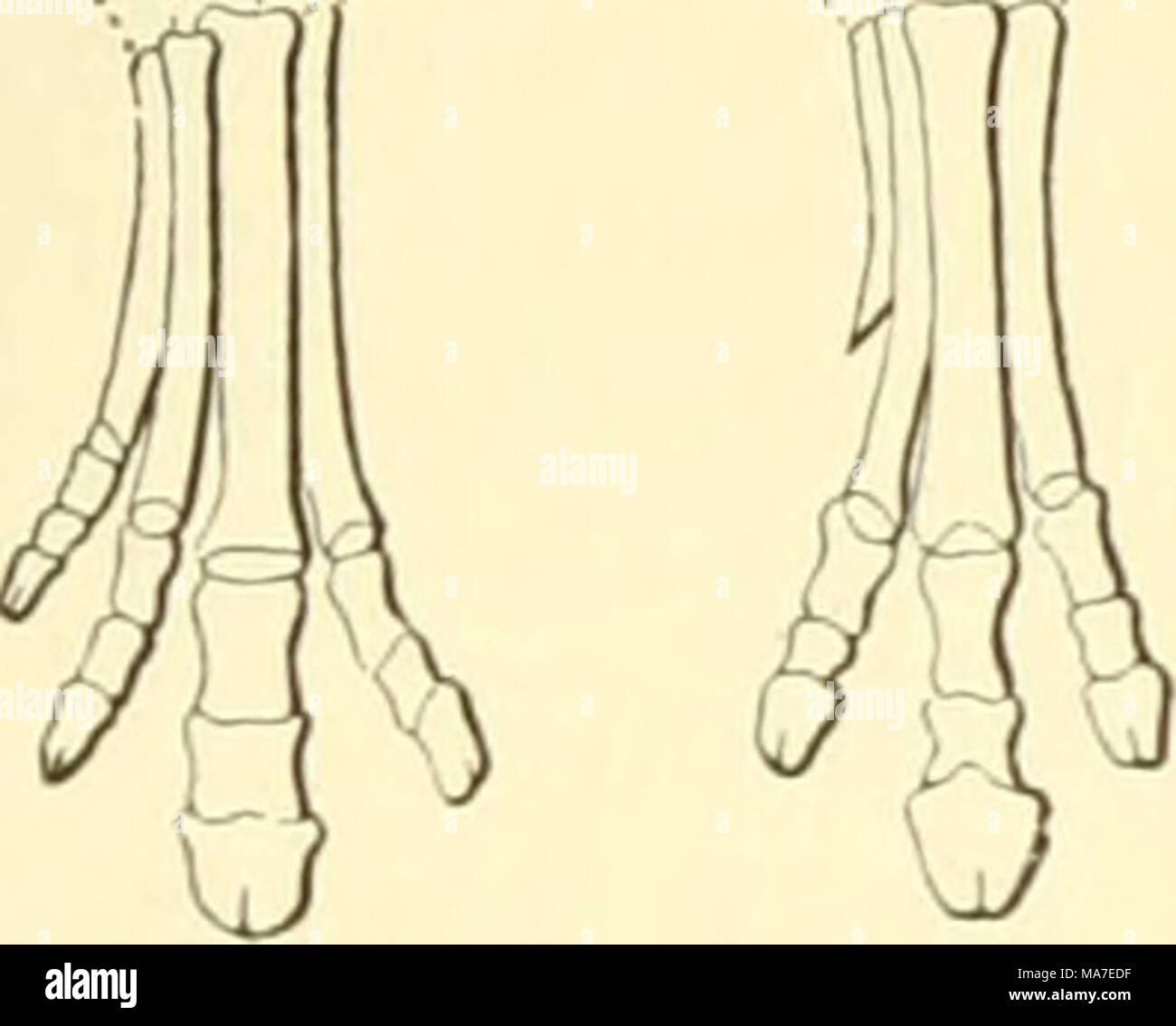 Fantastisch Anatomie Und Physiologie Einführung Galerie ...