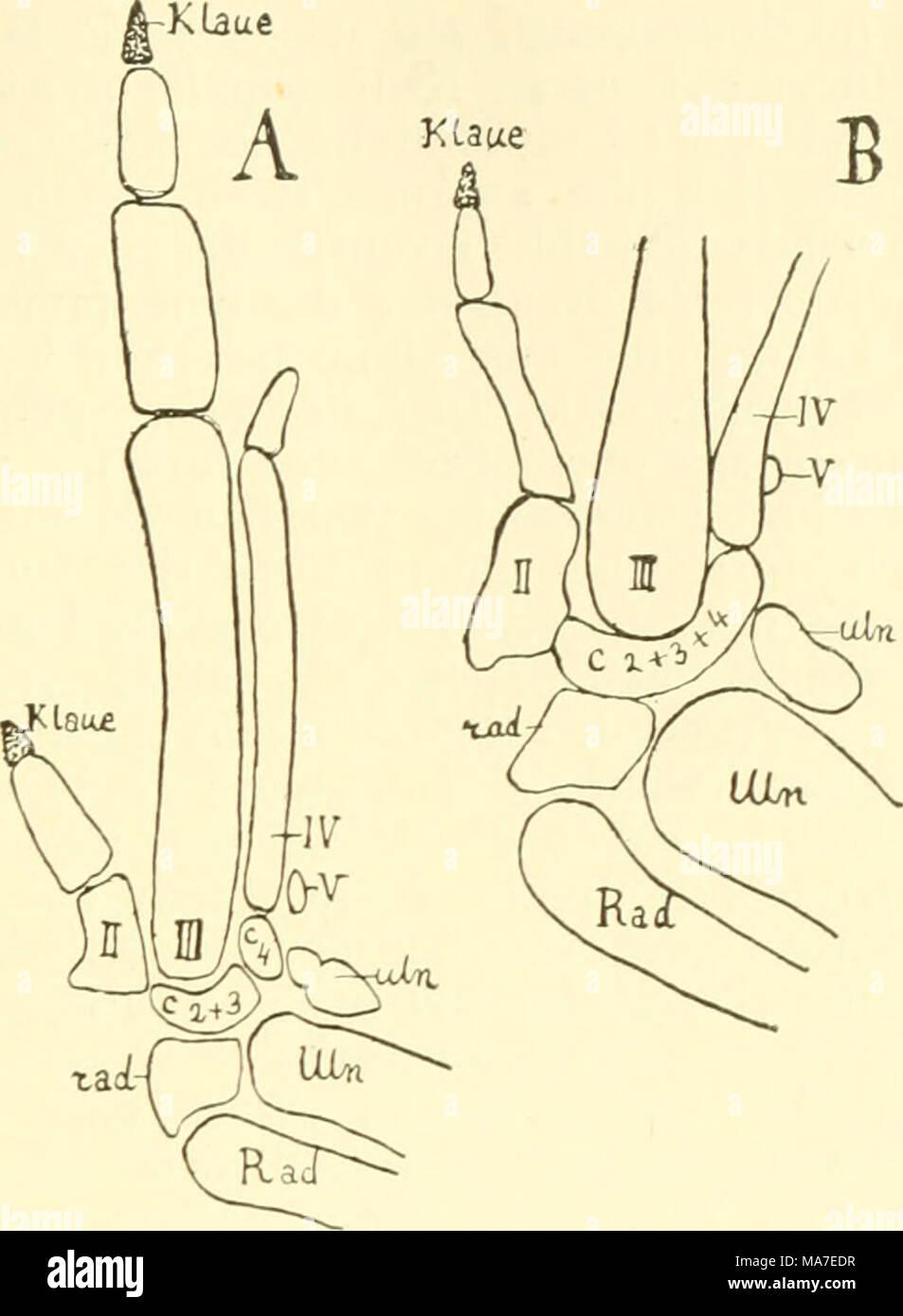 Fantastisch Anatomie Und Physiologie Studie Werkzeuge Galerie ...