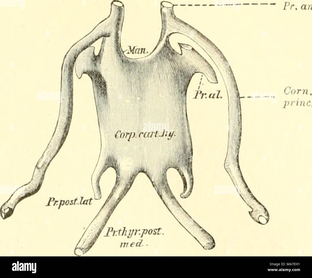 Tolle Einführung Anatomie Und Physiologie Zeitgenössisch ...