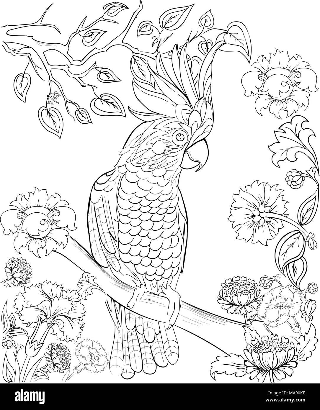 Cacatúa Parrot Para El Libro Para Colorear Coloración Anti