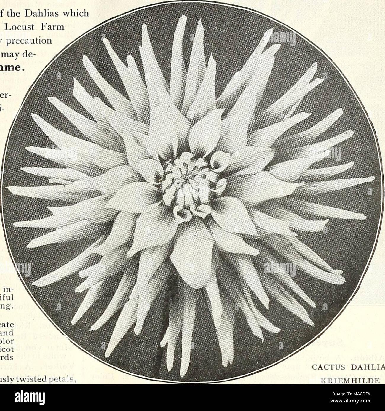 a0c89d755b55 Lista de precios al por mayor del Dreer   semillas para floristerías  Plantas semillas