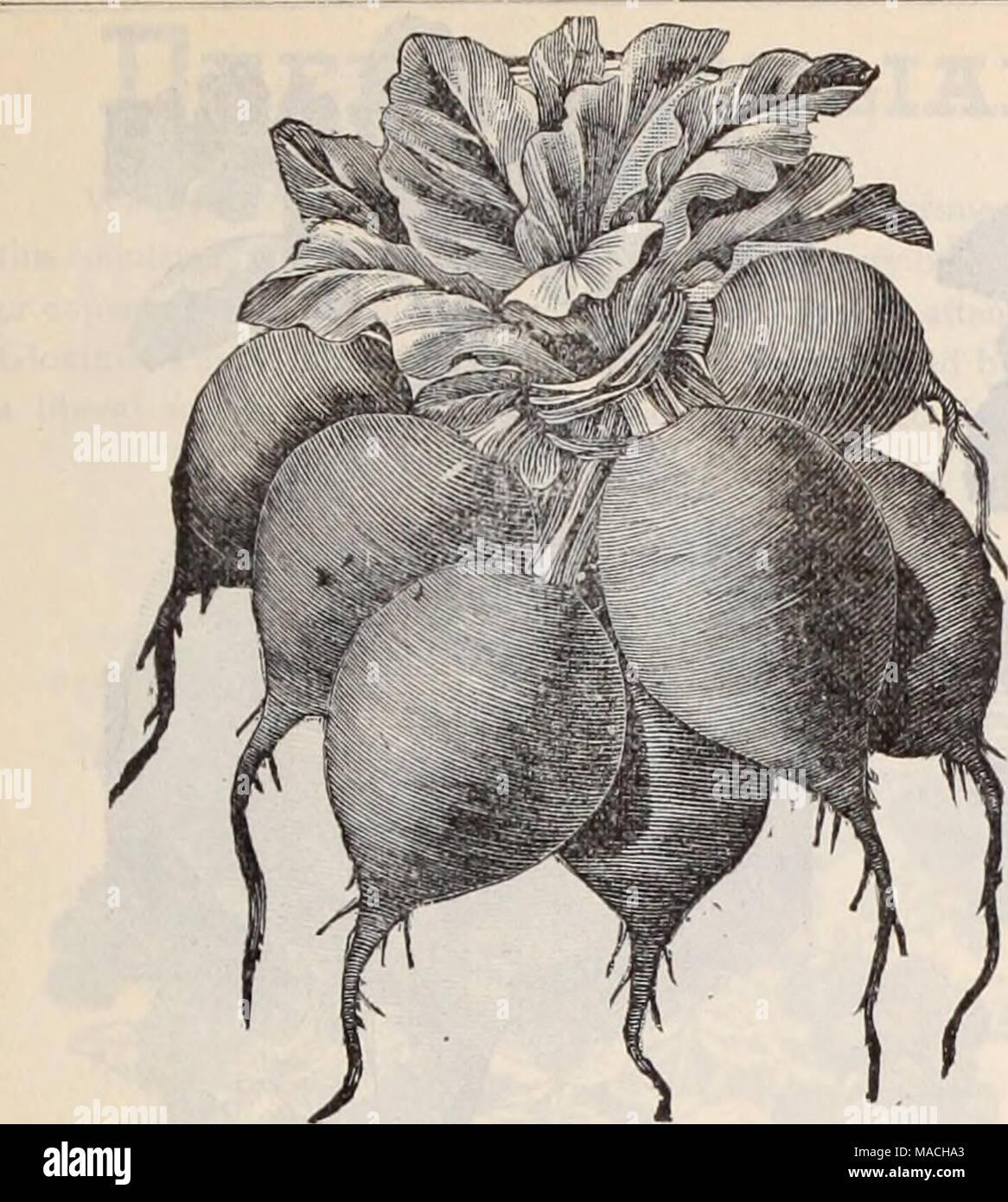 Early Scarlet Globe Imágenes De Stock & Early Scarlet Globe Fotos De ...