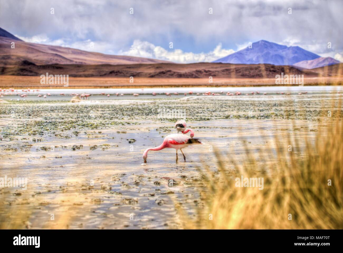 Laguna en el altiplano de Bolivia, Sudamérica Imagen De Stock