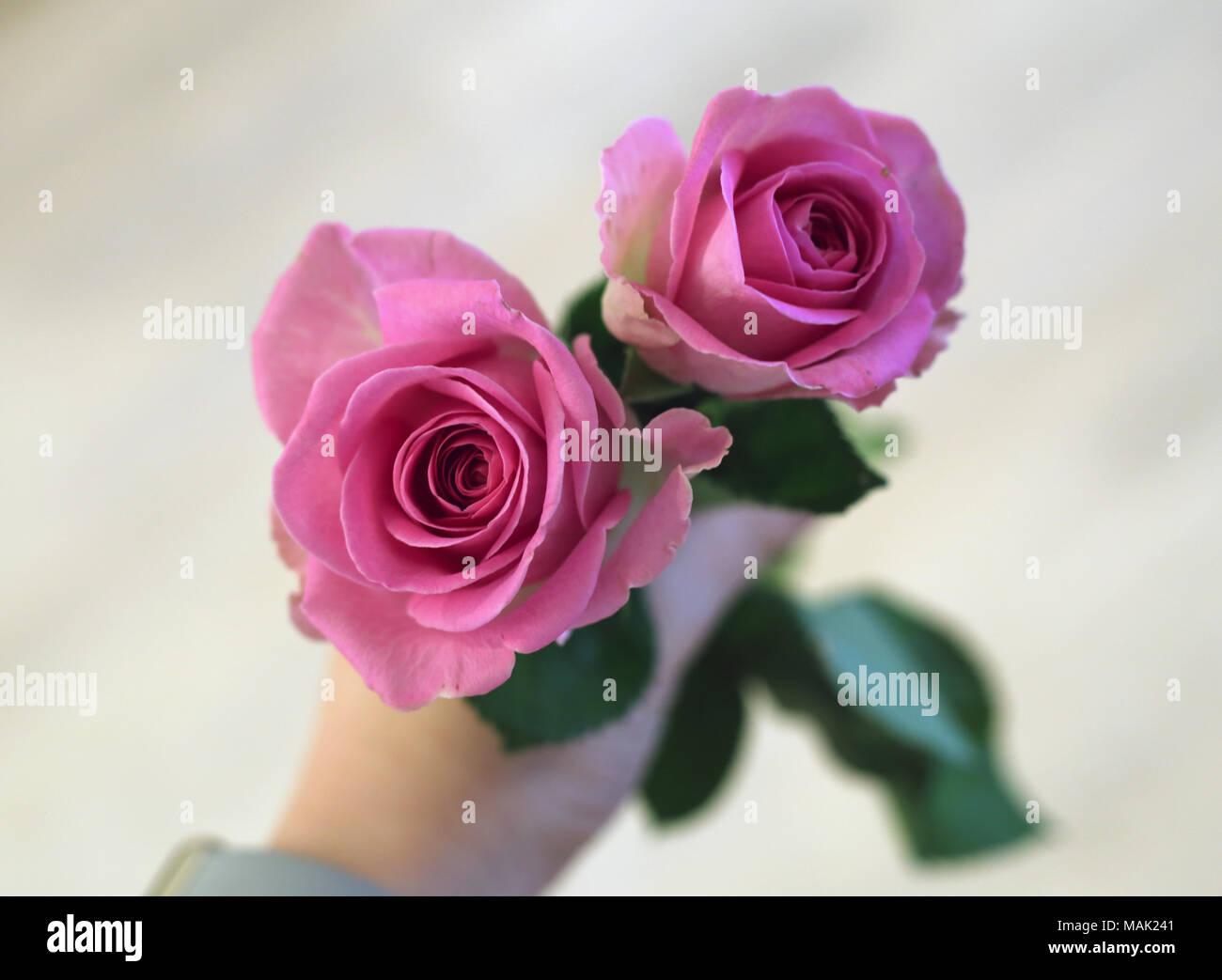 Dos Bonitas Y Hermosa Rosa Luz De Color Rojo Rosas En La