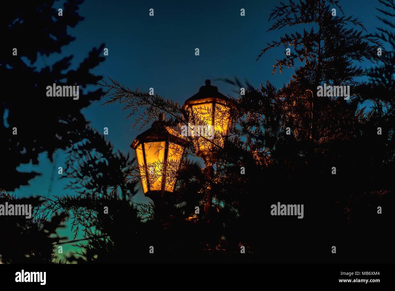Calle la luz luminosa en el trasfondo de la resaltada branckes coníferas, noche Imagen De Stock