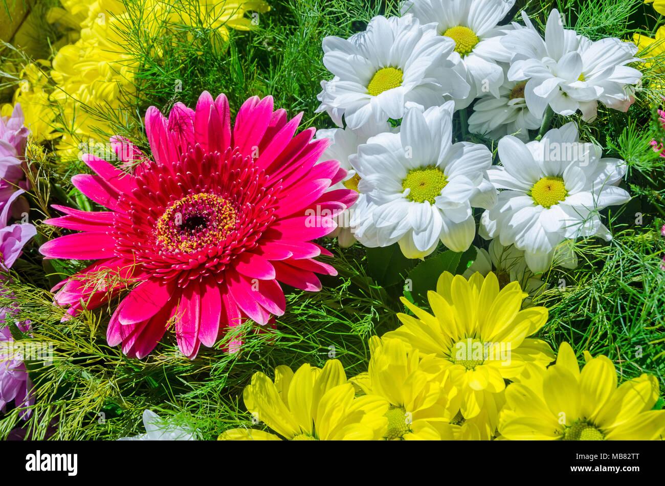 Un Hermoso Arreglo Floral Con Gerberas Margaritas Y