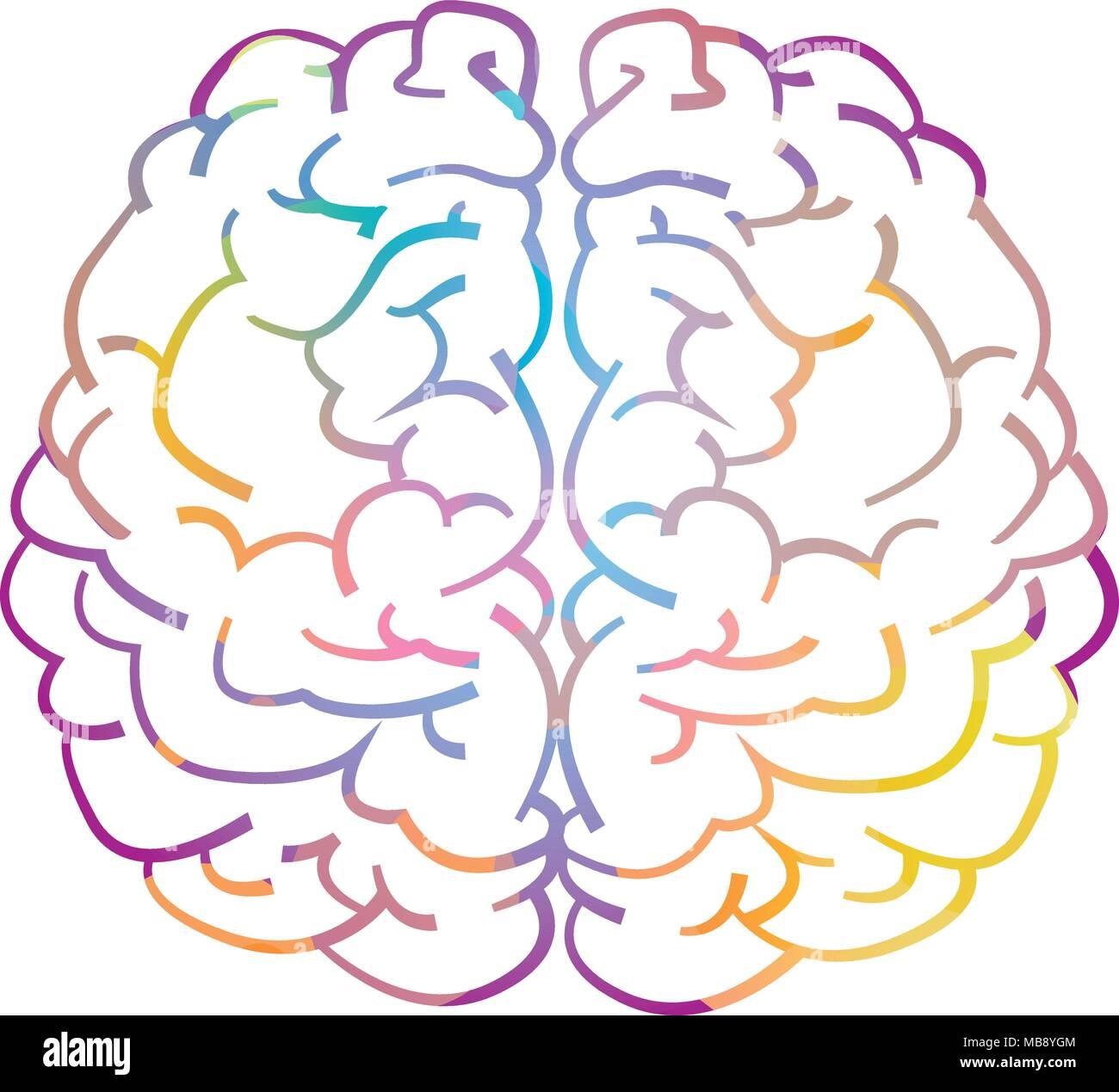 Hemisferio derecho e izquierdo del cerebro humano Imagen De Stock