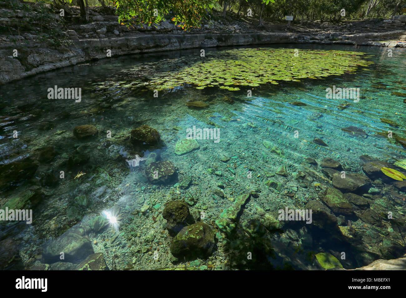 Cenote en Dzibilchaltun,Cenote Xlacah ubicado en Dzibilchaltun zona archeologica área en México Imagen De Stock