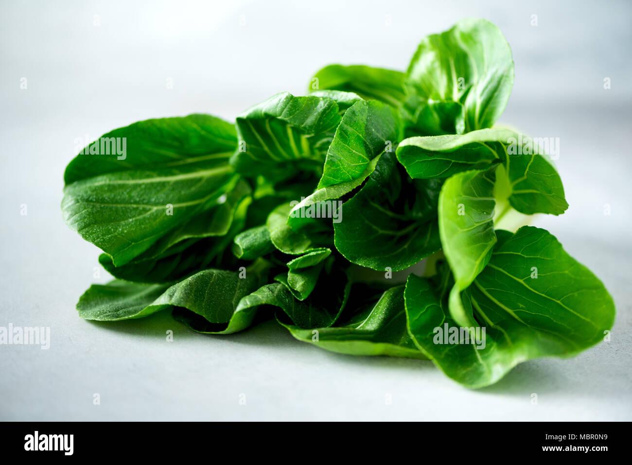 El bok choy orgánica verde repollo chino en hormigón gris de fondo. Copie el espacio, vista superior, laicos plana Imagen De Stock