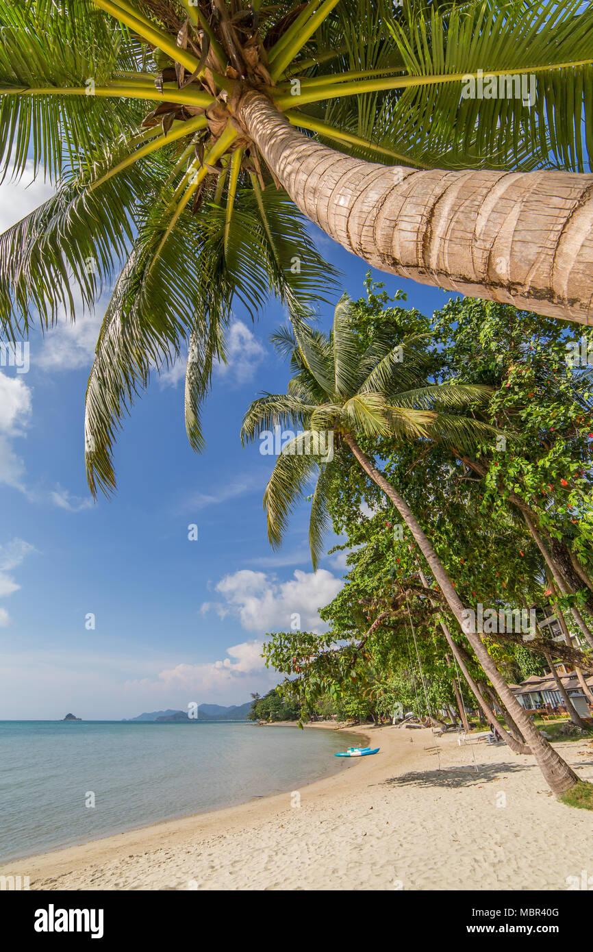 Palmeras en la hermosa playa tropical de la isla de Koh Chang en Tailandia Foto de stock