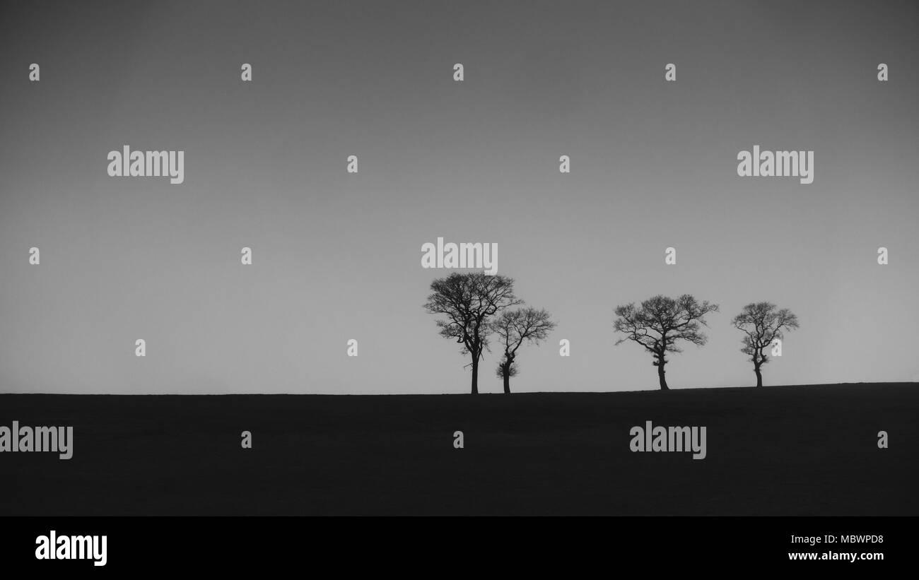 Vista simple de cuatro palitos de árboles con ramas desnudas en el horizonte en blanco y negro Imagen De Stock
