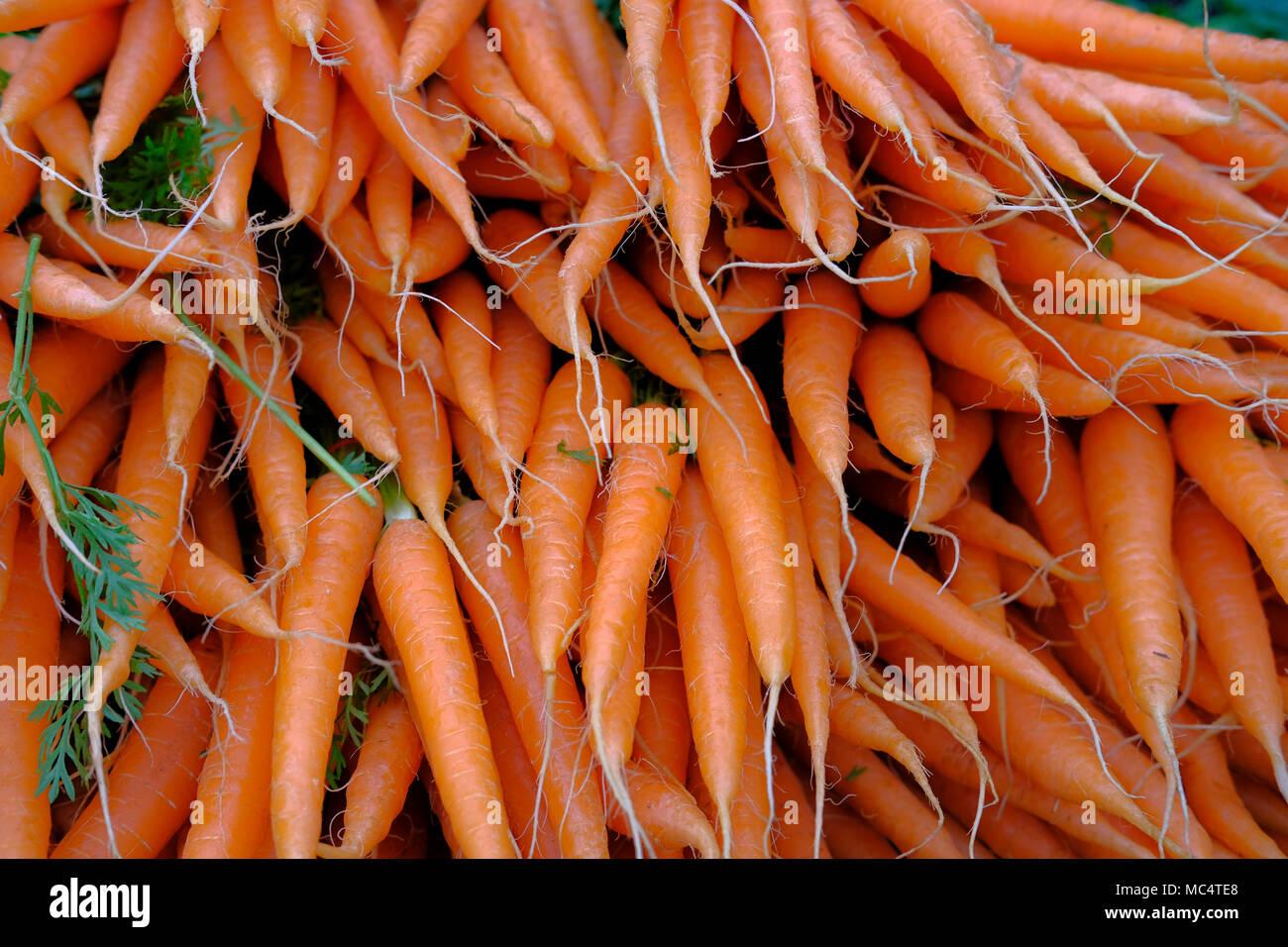 La Zanahoria Es Un Vegetal De Raiz Generalmente De Color Naranja Las Zanahorias Son Una Forma Domesticada De La Zanahoria Silvestre Daucus Carota Fotografia De Stock Alamy El color anaranjado desaparecerá cuando disminuyas la cantidad de zanahorias que ingieres. alamy