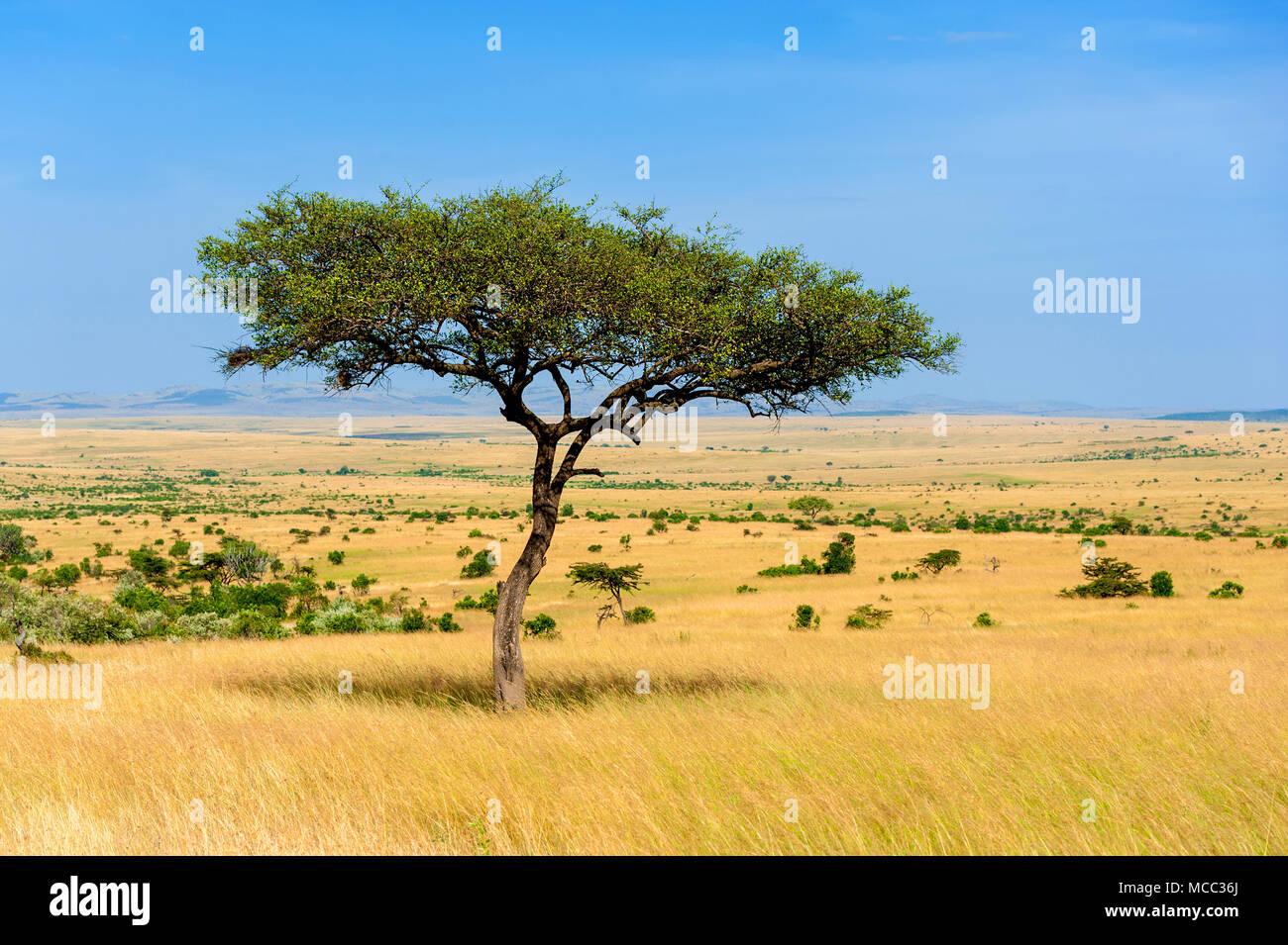 Hermoso paisaje con árbol de nadie en África Imagen De Stock