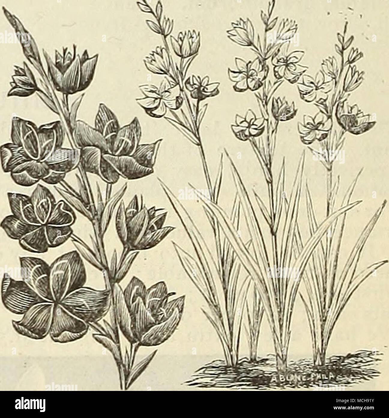 Book About Plants Imágenes De Stock & Book About Plants Fotos De ...