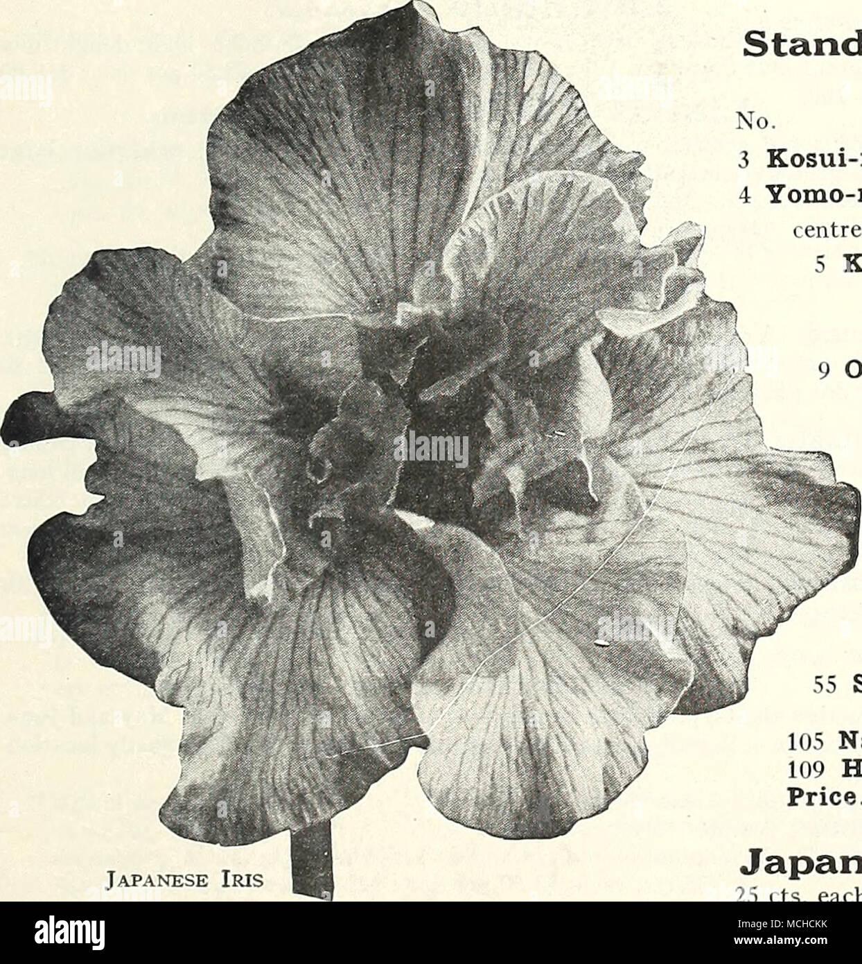 Fothergilla grandi monticola IN VASO 9 cm