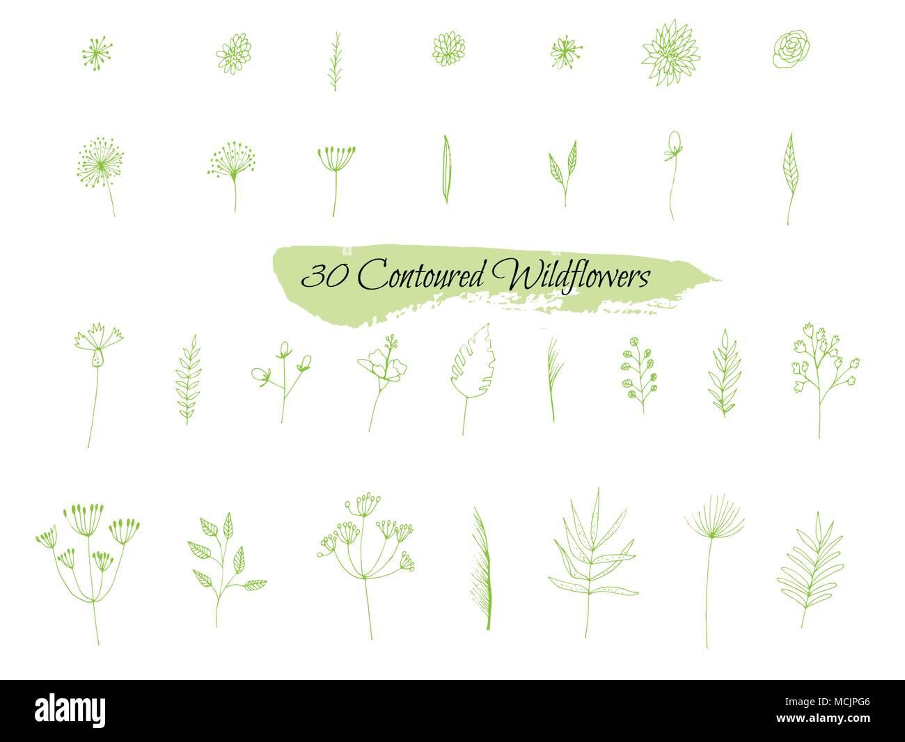 Una Coleccion De Dibujos Hechos A Mano Con Las Plantas Imagen