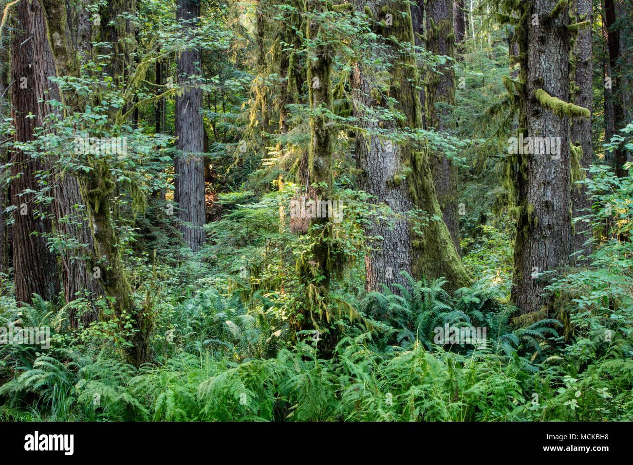 hermosos lugares en california Los Lugares Ms Hermosos De California Imgenes De Stock
