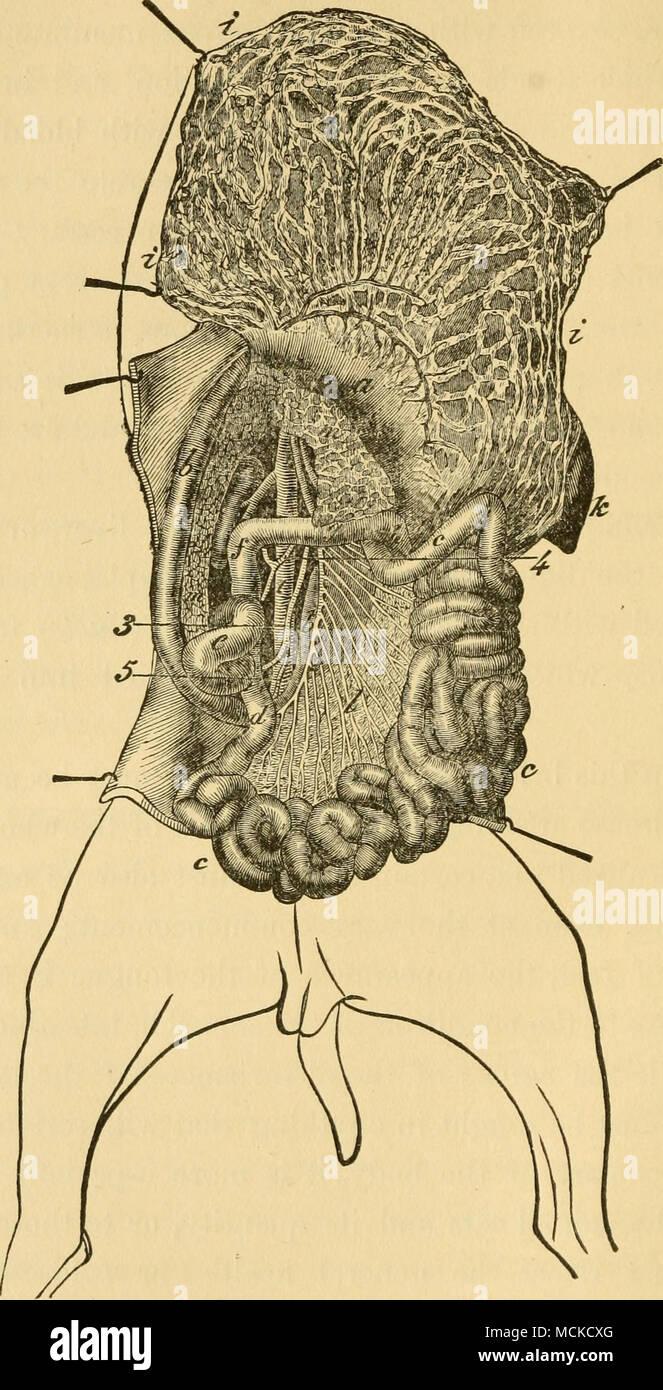 Increíble Gran Anatomía De Colon Foto - Imágenes de Anatomía Humana ...