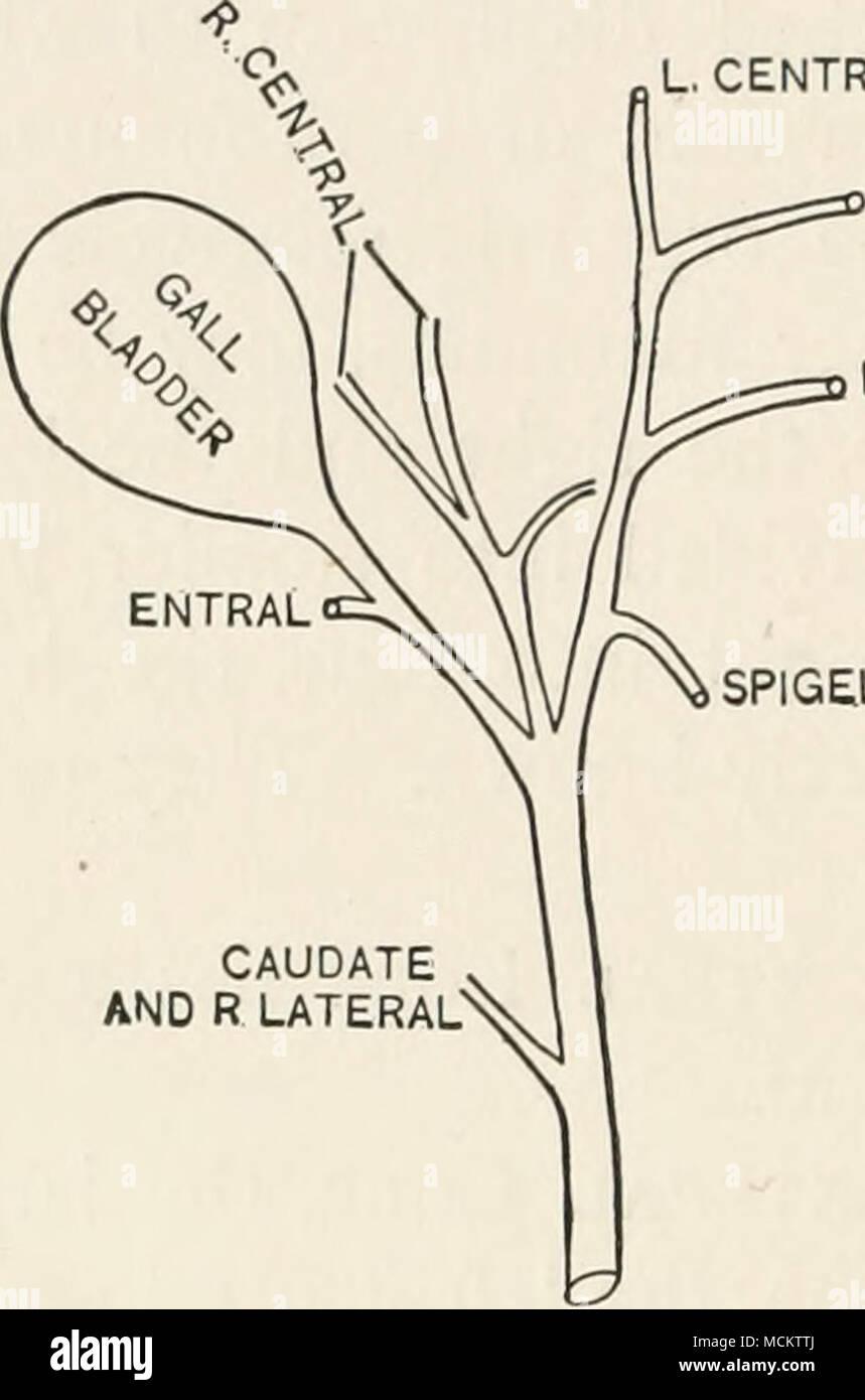 Fantástico Diagrama De Intestinos Fotos - Anatomía de Las ...