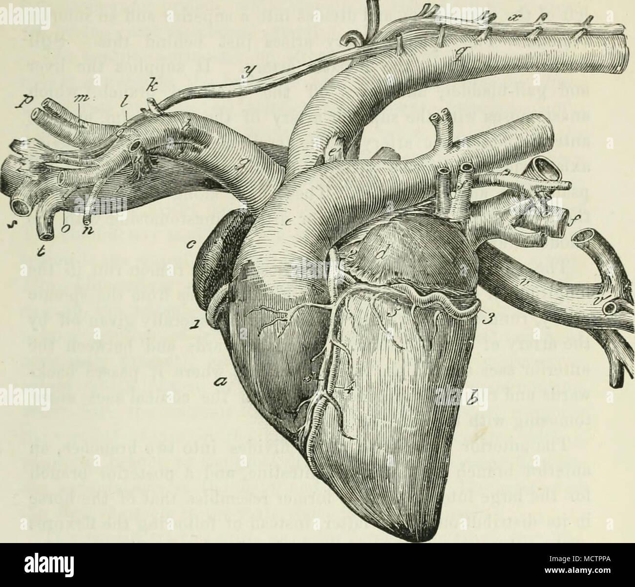 Dorable Arteria Axilar Foto - Anatomía de Las Imágenesdel Cuerpo ...