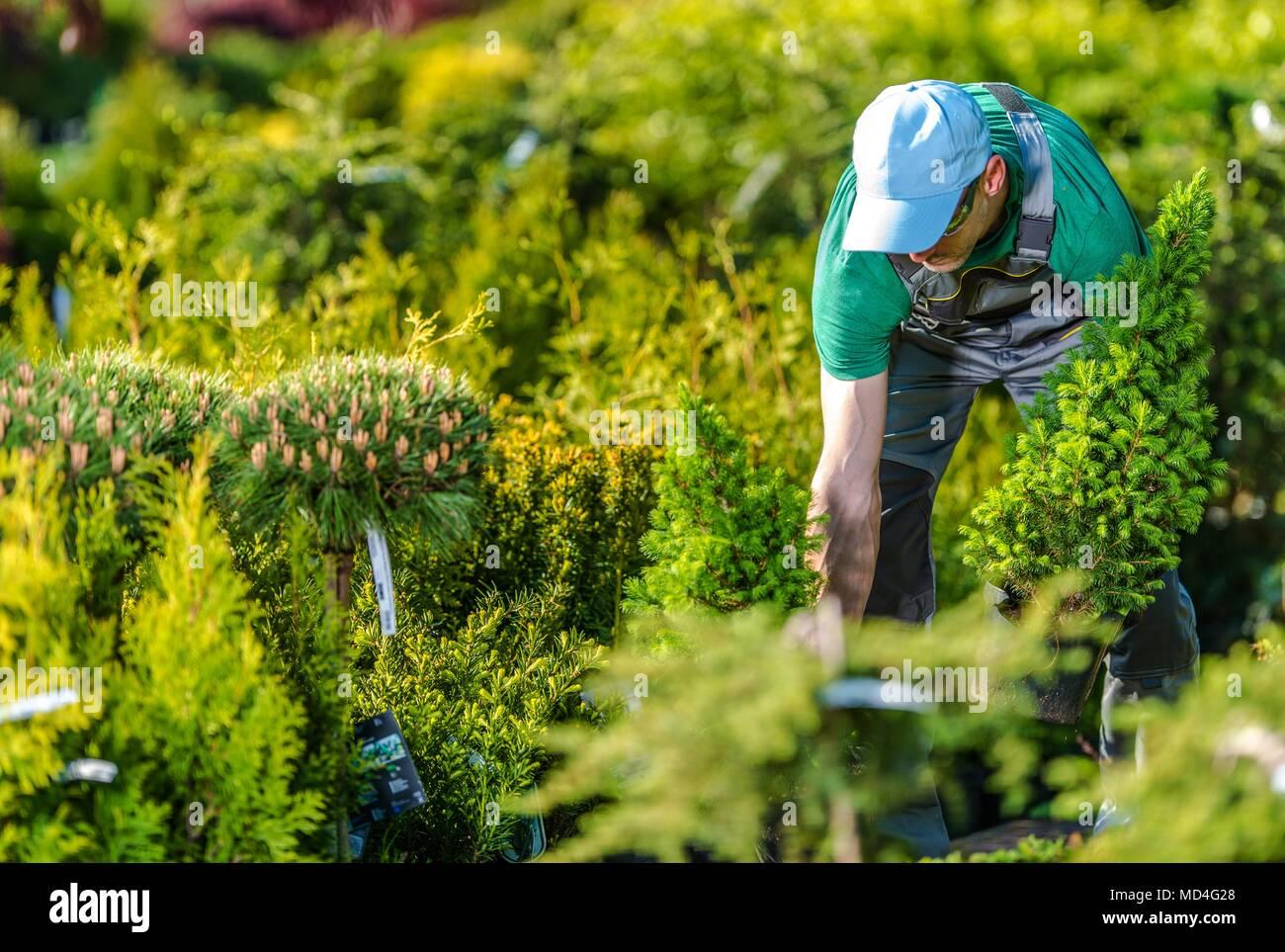 Jardinero caucásica comprar nuevas plantas en su jardín favorito tienda. Foto de stock