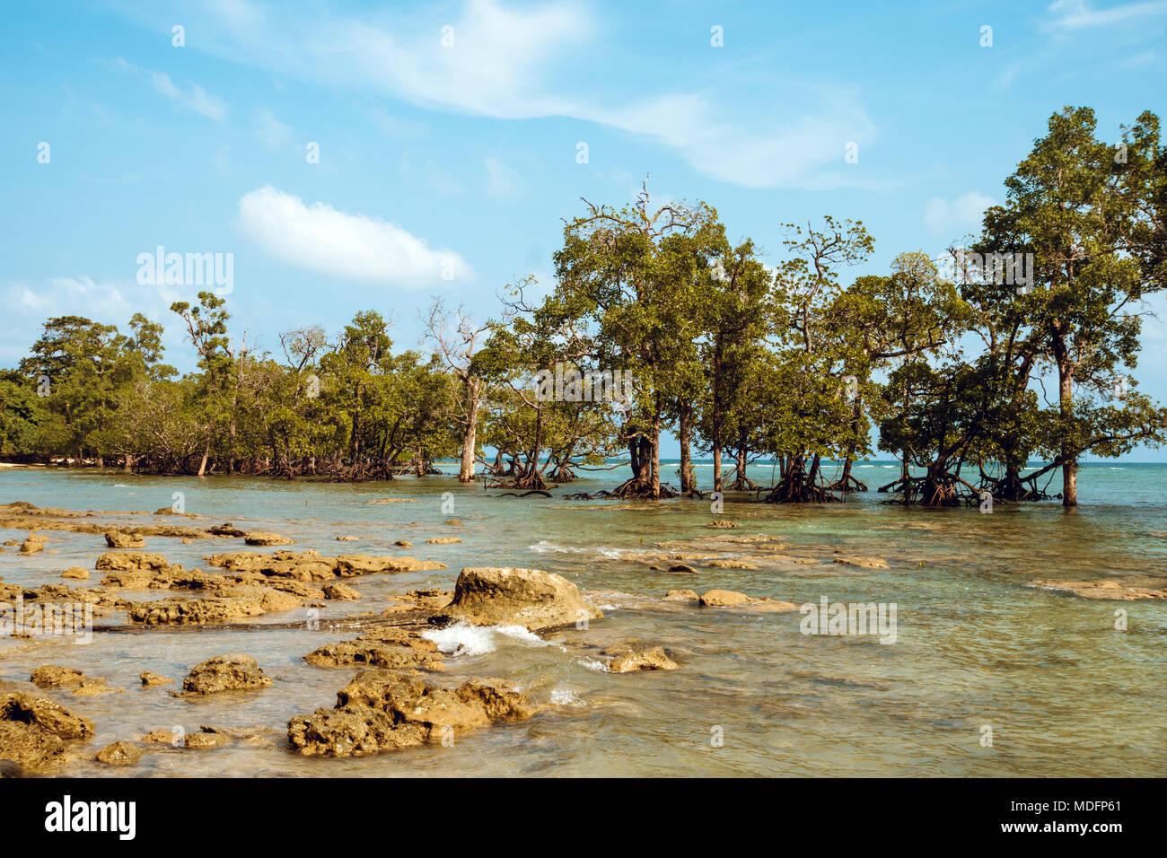 Altos árboles de mangle Rhizophora sp. se elevan de las aguas poco profundas del archipiélago de Mergui en Myanmar. Este conjunto de islas tiene amplia mangrov Foto de stock