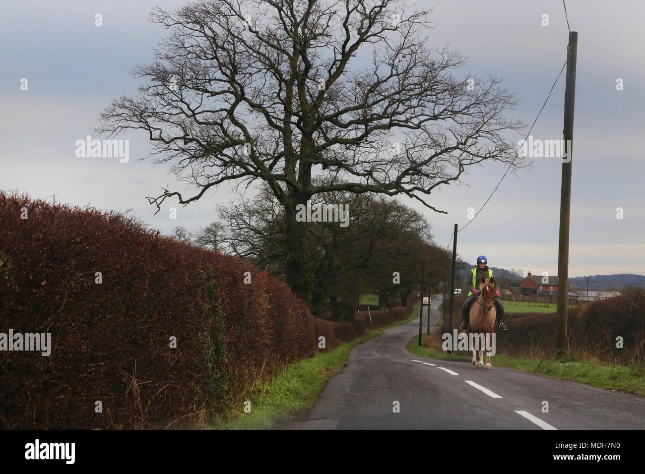 Jinete en Country Road cerca de Gillingham Dorset, Inglaterra Imagen De Stock