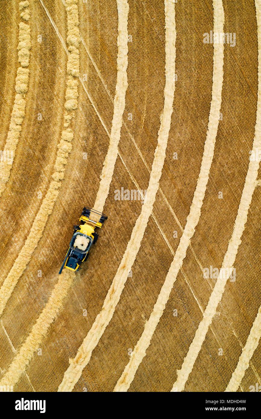 Vista aérea directamente encima de una cosechadora recogiendo líneas de grano; Beiseker, Alberta, Canadá Foto de stock