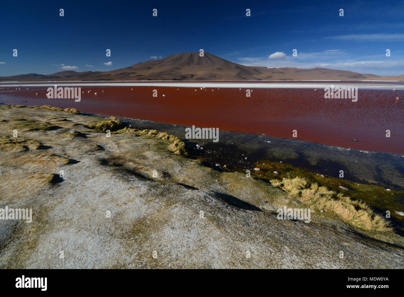 Paisaje de Laguna Colorada. Fauna Andina Eduardo Avaroa Reserva Nacional. Bolivia Imagen De Stock