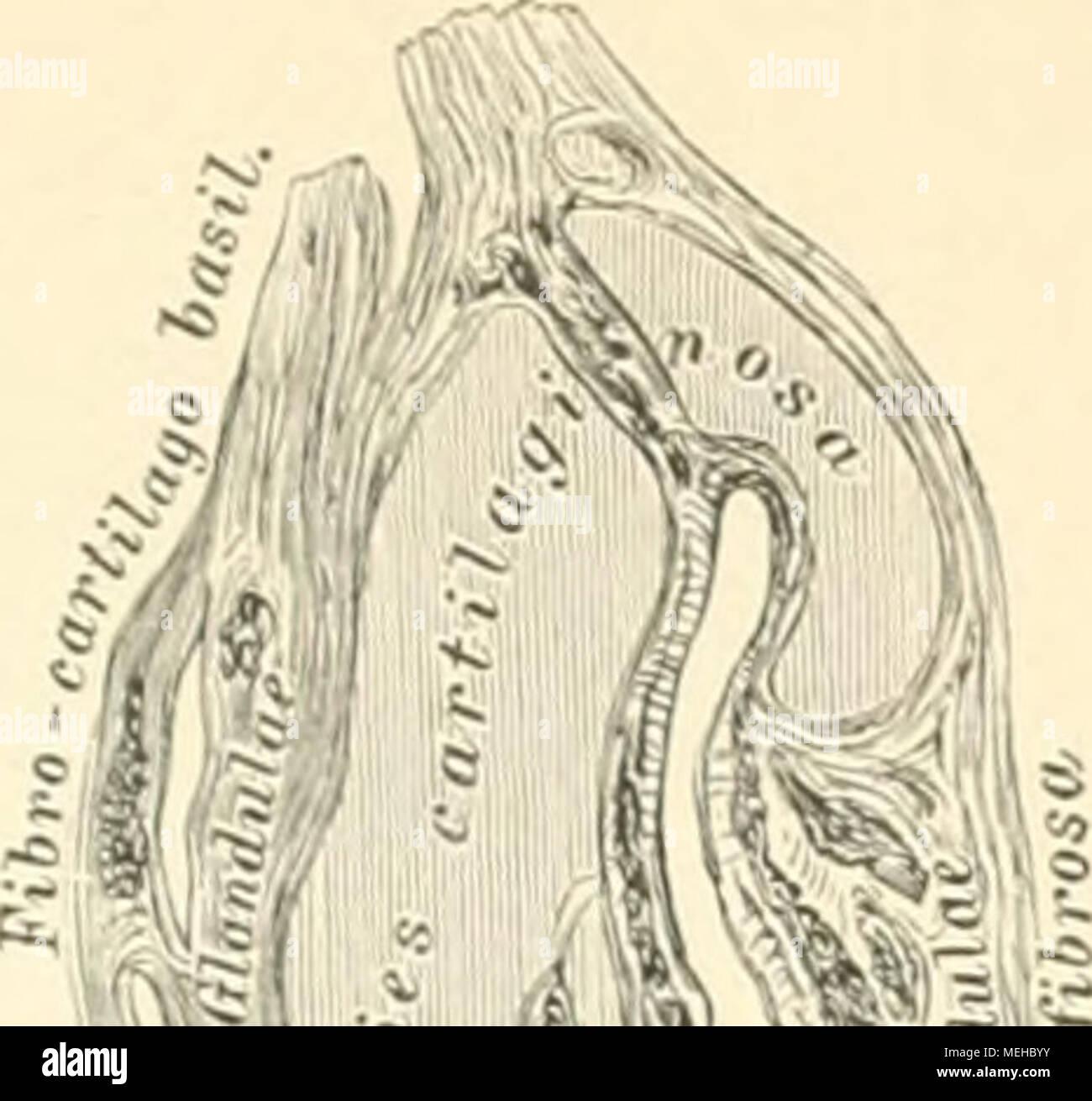 Bonito El Anatomie De Los Abusos Galería - Anatomía de Las ...