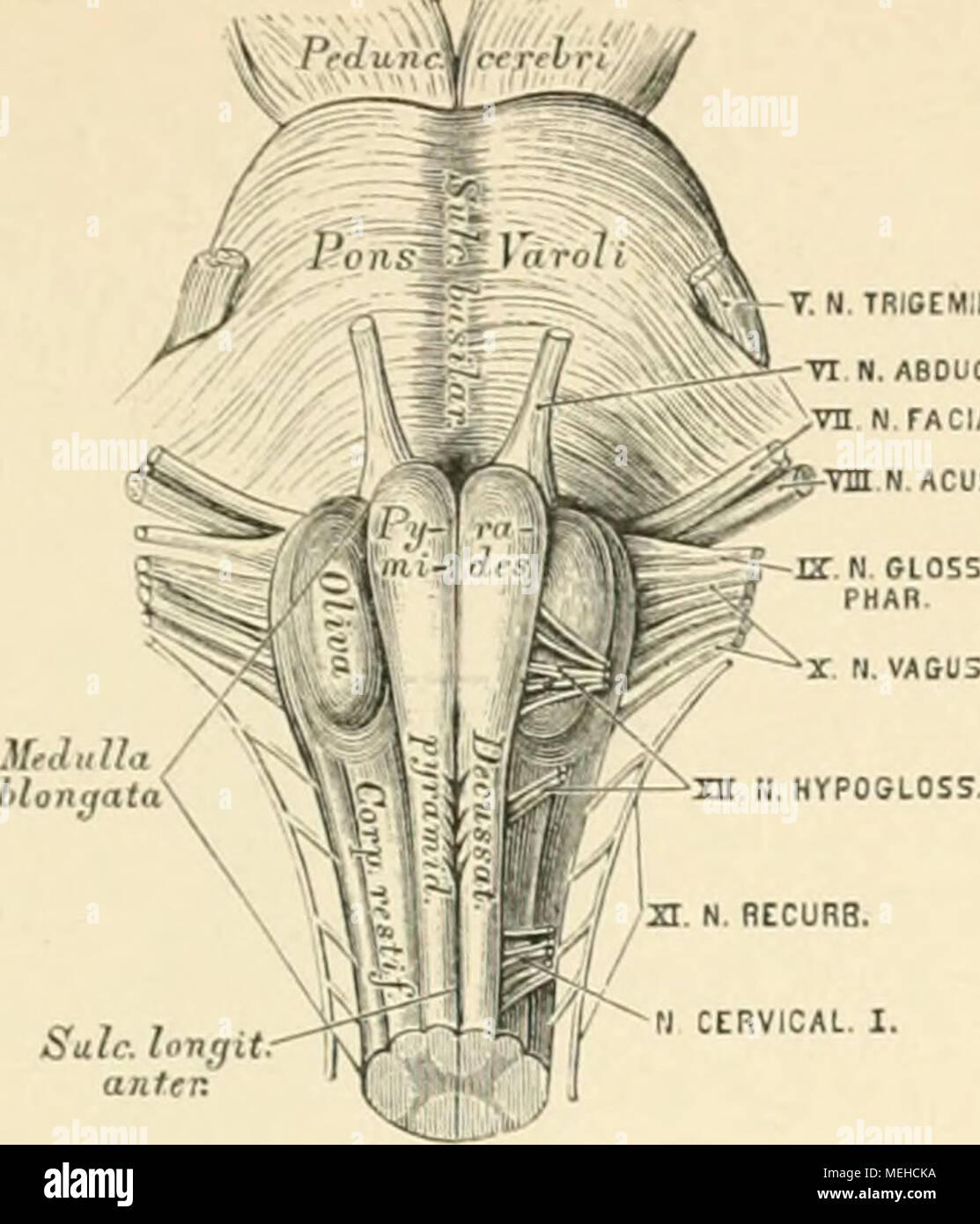 Ziemlich Wesentliches Der Anatomie Und Physiologie Mcgraw Hill Ideen ...