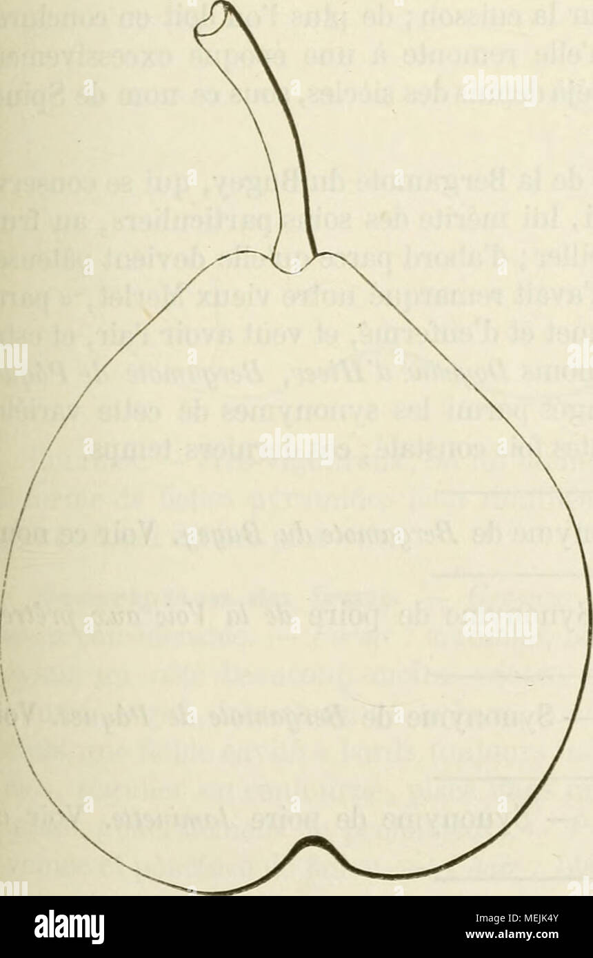 . Dictionnaire de pomologie, contenant l'histoire, la descripción, la figura frutas des anciens et des modernes frutos les plus g©n©ralement connus et cultiv©s . Synonjnies. poires : Bergamote Bugi (Dom Claude Saiot-Ãtienne ins- truction, Nouvelle pour connaître les bons frutas, 1670, p. 81). Â2. Violette (/rf. e6?'rf. ) Âs.Pera Spina (Merlet, l'Sabre'gé des Bons frutas, édition de 1675, pág. 120). j. 4. Ministre du (Wem, édition de 1690,p. 106). Â5.Nicole {Id., ibíd.). 6. Du Bugi (la Quintinye, Instrucciones pour les Jardins et potagers fruitiers, édition de 1739, pág. 275). 7. Grosse-R Foto de stock