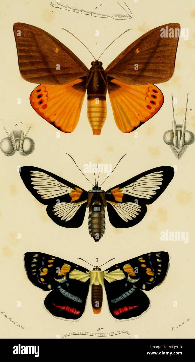 . Dictionnaire Universel d'histoire naturelle : résumant et complétant tous les faits présentés par les encyclopémuere, les anciens dictionnaires scientifiques, les oeuvres complètes de Buffon, et les... traités spéciaux sur les diverses ramas des Sciences Naturelles. .. . .^-'cAi////(â /'f/ii/.r (('.isliii.i j,.|.vx/A// ) __ 2. ^tr////t :!.- /(/A//-I/T A,r/>/ (Ao.Corvli nisla (r.i.v.ll.^ Foto de stock